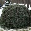 Augalų paruošimas žiemai